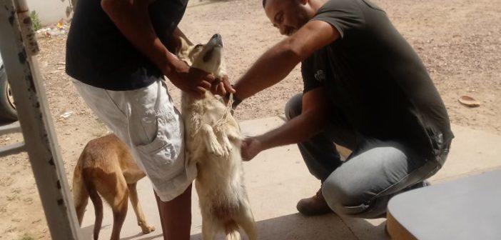 Secretaria de saúde realiza vacinação de cães e gatos na cidade de Chorrochó